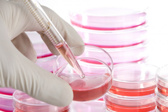 Regulating Stem Cell Research – Different Perspectives